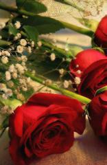 گل های خوشبختی